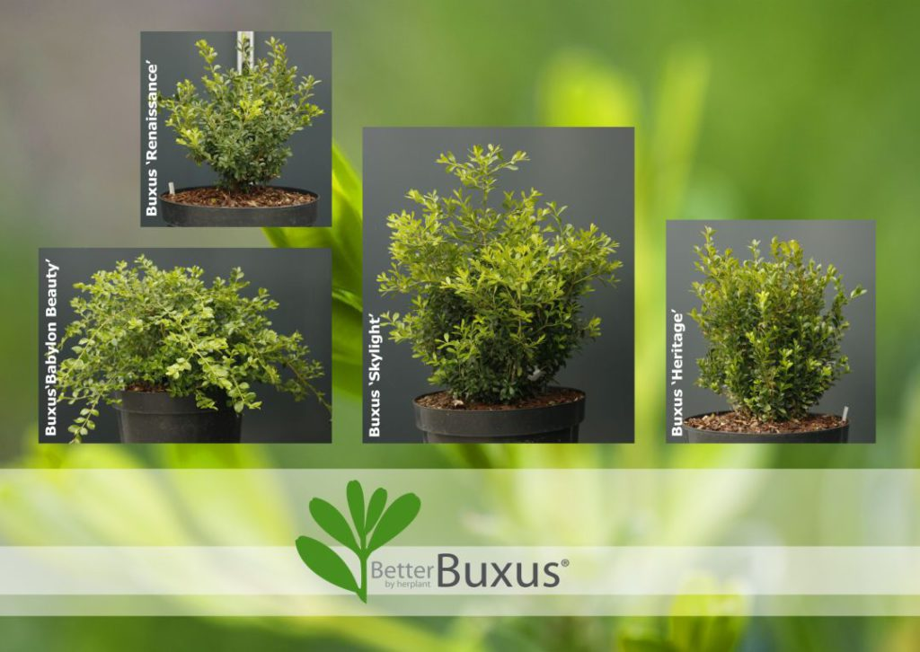 BetterBuxus® collage